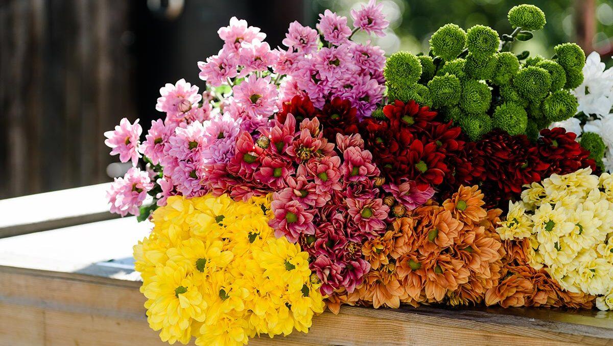 Les meilleures fleurs d'automne