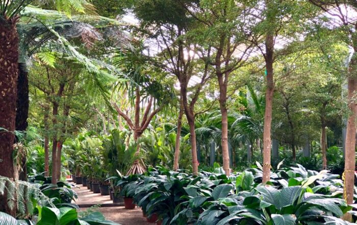 Fachjan Planten