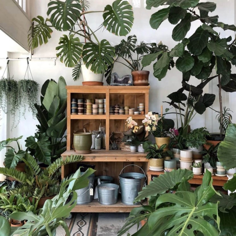 Houseplants in a decorative setting
