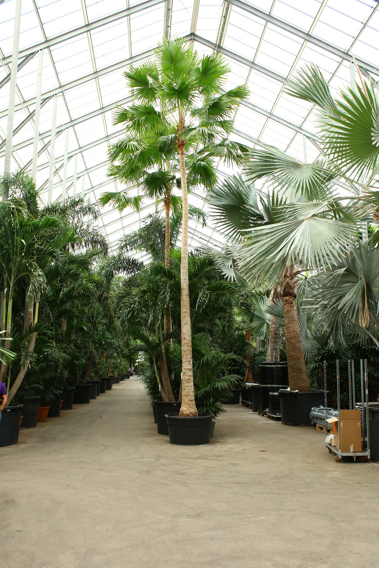Jungle Plants Urban