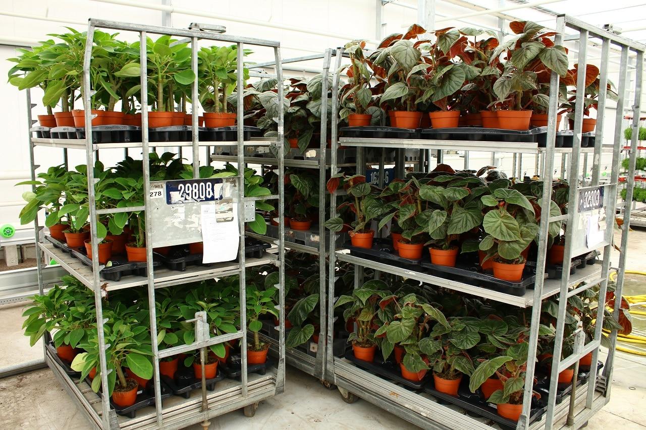 Karren vol kamerplanten